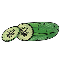 Drawing cucumber food nutrition vector