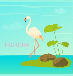 Flamingo standing in water vector