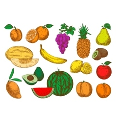 Freshly harvested ripe fruits sketch icons vector image