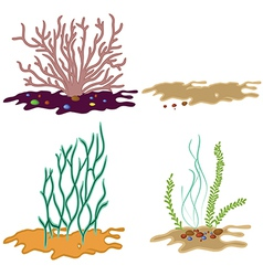 Algae seeweed set vector