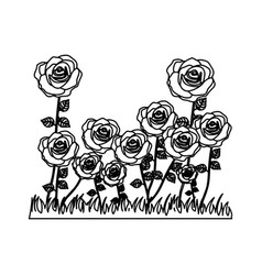 Silhouette rose bush in pasture floral design vector
