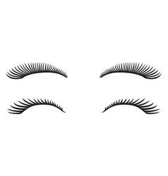 eyelashes design vector image