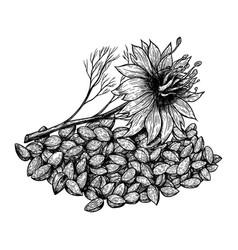 Cumin or nigella sativa plant and seeds hand vector