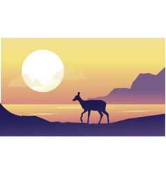 Deer on the riverbank scenery at sunrise vector