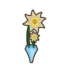 bouquet daffodil flower image vector image