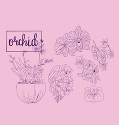 Hand drawn sketch collection of orchid flowers in vector