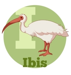 ABC Cartoon Ibis vector image
