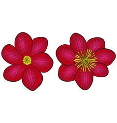 clematis flowers vector image