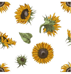 hand drawn seamless pattern with sunflowers vector image