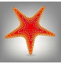 Starfishe icon vector