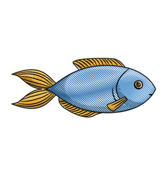colored pencil silhouette of blue trout fish vector image