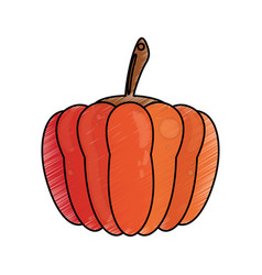 drawing pumpkin food nutrition vector image