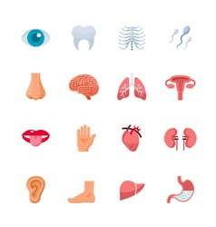 Human Anatomy Icons vector image