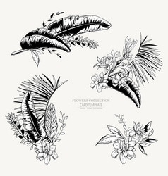 monochrome set tropical leaves exotic vector image