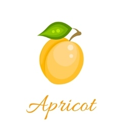 Orange apricot icon vector