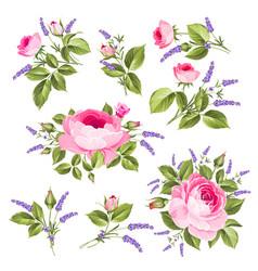 Vintage rose set vector