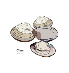 Clams mussels seafood sketch style vector