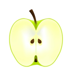 Half an apple on a white background vector
