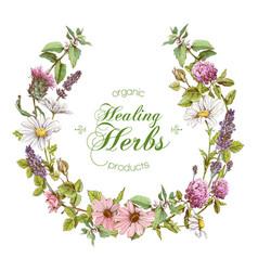 Herbal wreath vector