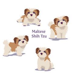 maltese vector image
