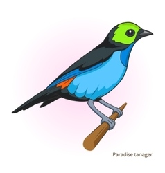 Paradise tanager bird educational game vector image