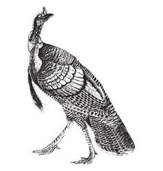 Turkey vintage vector