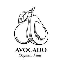 hand drawn avocado icon vector image