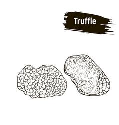 Outline mushrooms truffle sketch vector