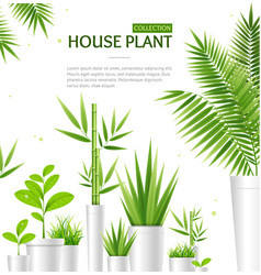 realistic 3d detailed house plant concept banner vector image
