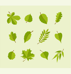 Types of leaves - modern flat design icons vector