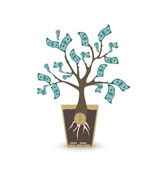 ypung money tree isolated object on white vector image