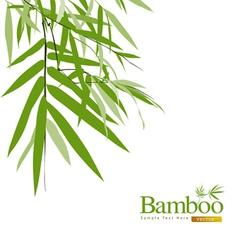 bamboo greeting card vector image