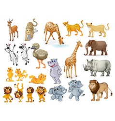 Wildlife set vector image vector image