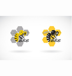 bee and honeycomb design on white background vector image