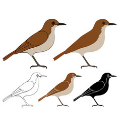 Joao de barro bird in profile view vector