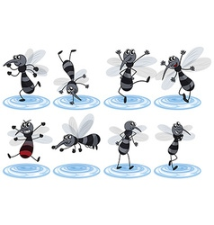 Mosquitos in different actions vector image