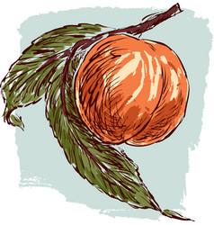 Sketch of a ripe peach vector