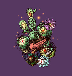 succulents and cactus vector image vector image