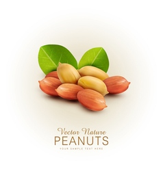 peanut kernels isolated with green leaves vector image
