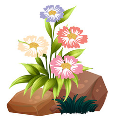 Colorful flowers and rocks on white background vector