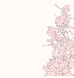 hand painted line pink peonies vector image