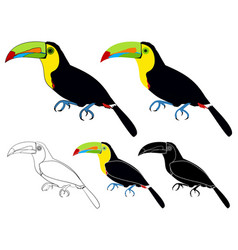 Keel billed toucans bird colored vector