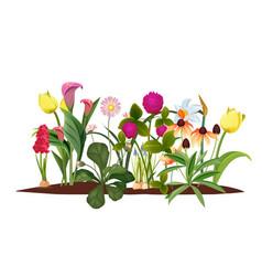 spring flower bed garden blossom flowers vector image