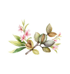 watercolor wreath fruits and leaves of vector image