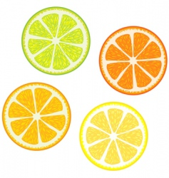 citrus fruits vector image vector image