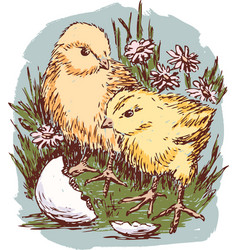 newborn chickens in the grass vector image