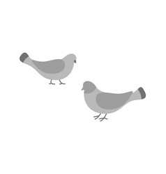 pigeon birds animals eating and walking on ground vector image