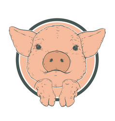 sketch of pig piglet face drawn in a circle vector image
