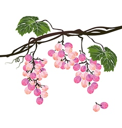 Stylized polygonal branch of rose grapes vector image