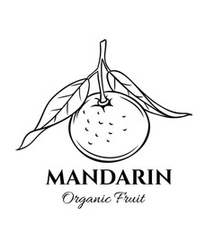 hand drawn mandarin icon vector image